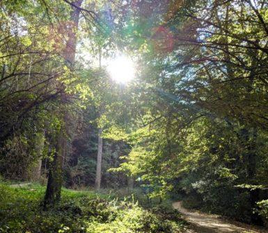 pour casser la routine du quotidien et se ressourcer, rien de tel qu'une balade en forêt